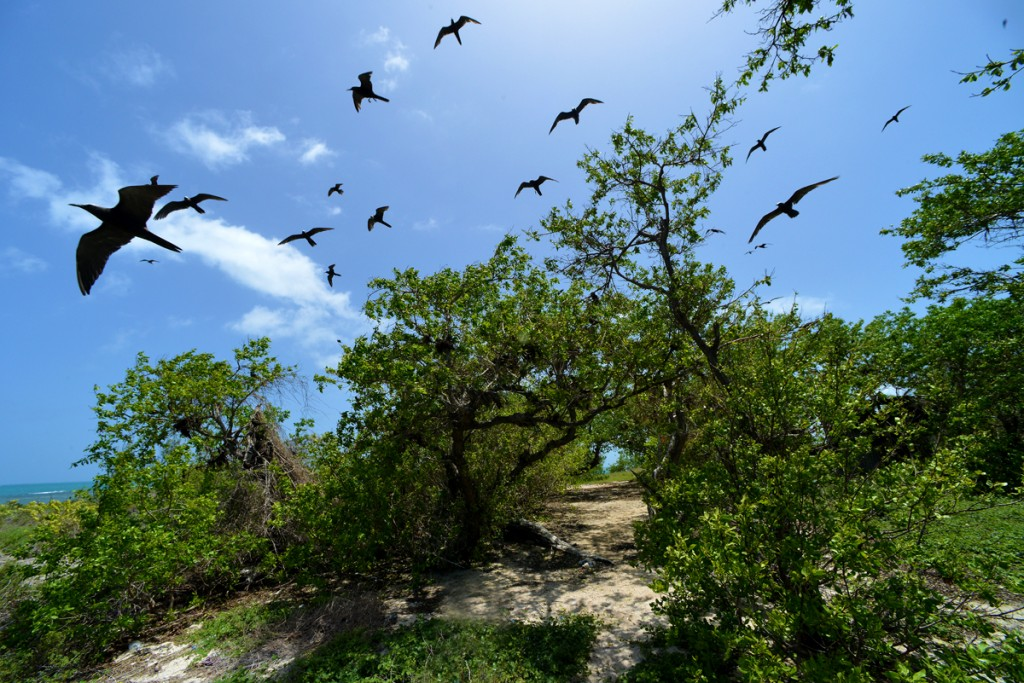Little Half Moon Cay, Jamaica