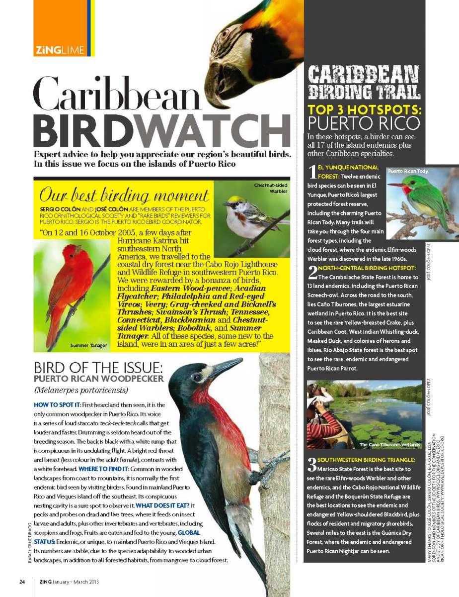 ZiNG-Caribbean-Birdwatch-Winter-2013-Issue-18