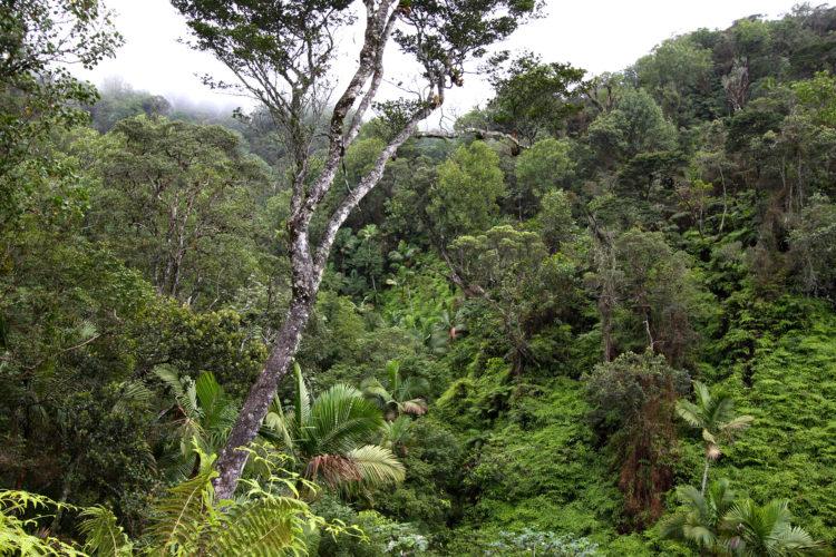 Enriquillo-Bahoruco-Jaragua Biosphere Reserve (Photo by Steve Latta)