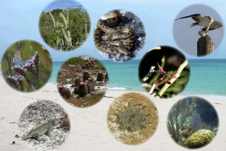 Turks and Caicos Biodiversity
